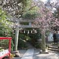 Photos: 荏柄天神社(鎌倉市)