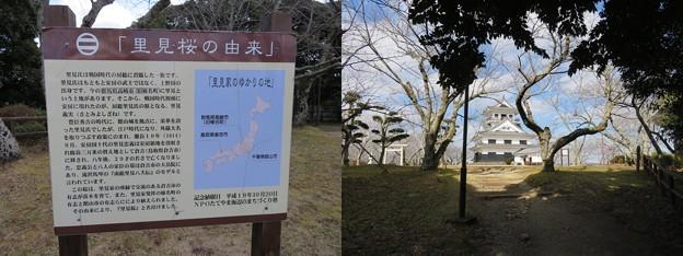 館山城(千葉県館山市)里見桜由来・模擬天守