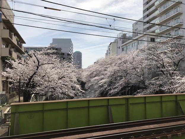 Photos: 18.03.26.新宿区西早稲田
