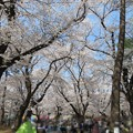 Photos: 18.03.28.大宮公園(さいたま市大宮区)