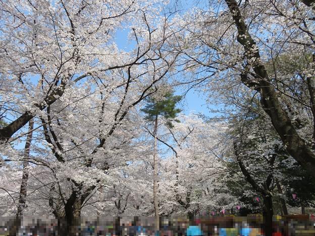 18.03.28.大宮公園(さいたま市大宮区)