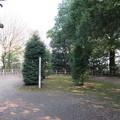 写真: 氷川女体神社(見沼区)磐船祭祭祀遺跡