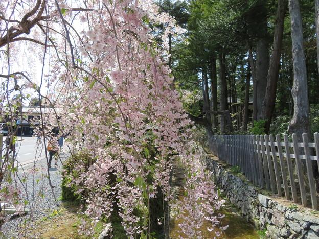 Photos: 18.04.23.高野山真言宗 総本山金剛峯寺(和歌山県)