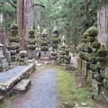写真: 高野山金剛峯寺 奥の院(高野町)武蔵河越酒井家墓所