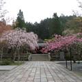 Photos: 18.04.24.高野山金剛峯寺 奥の院(高野町)英霊殿前