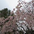 18.04.24.高野山金剛峯寺 奥の院(高野町)英霊殿前