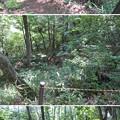 Photos: 虎御前山城(長浜市)木下秀吉陣跡・かざし堀