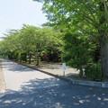 Photos: 姉川古戦場(長浜市)血原
