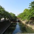 写真: 水門川(大垣市)高橋より