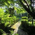 お茶屋屋敷跡(大垣市)赤坂ぼたん園