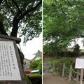 専精寺/垂井城(岐阜県不破郡)垂井の泉