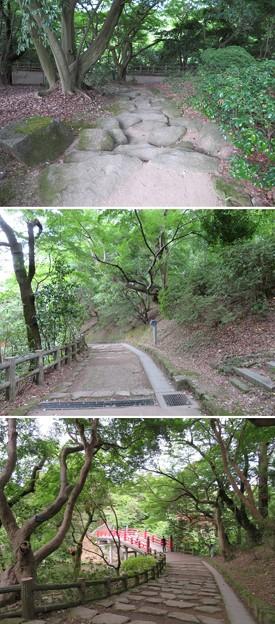 高岡城(高岡市。高岡古城県定公園)本丸北縁