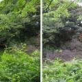 高岡城(高岡市。高岡古城県定公園)搦手・外堀