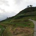 写真: 白米千枚田(輪島市)