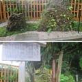 写真: 妙成寺(羽咋市)さざれ石
