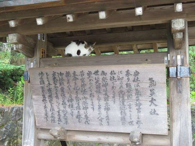 氣多大社(羽咋市)(ΦωΦ)