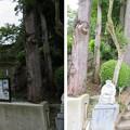 山の寺寺院群 本行寺(七尾市)