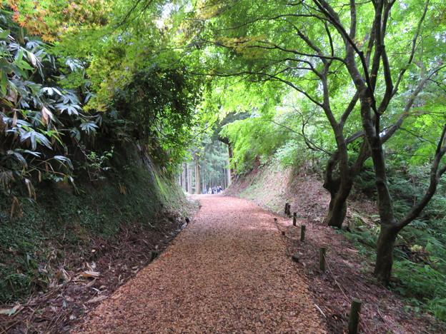 七尾城(石川県)切通