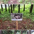 Photos: 七尾城(石川県)桝形