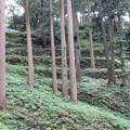 写真: 七尾城(石川県)桜馬場北側下石垣