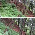 高原諏訪城(飛騨市)右下方 竪堀