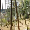 Photos: 庁南城(長生郡長南町)西側面尾根郭/神明神社