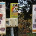 写真: 地磁気逆転地層(チバニアン。千葉県市原市)