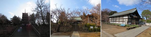 本土寺(松戸市)境内
