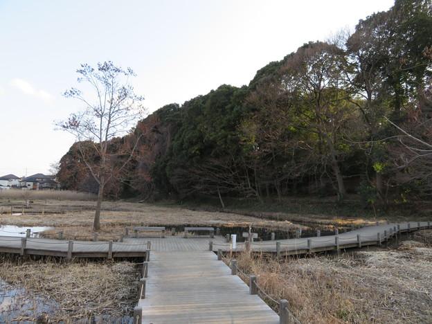 根木内城(松戸市)湿地