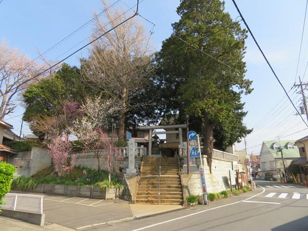 18.03.27.矢切神社(松戸市)