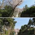 Photos: 18.03.27.第二次国府台合戦場/西蓮寺(松戸市)駐車場前