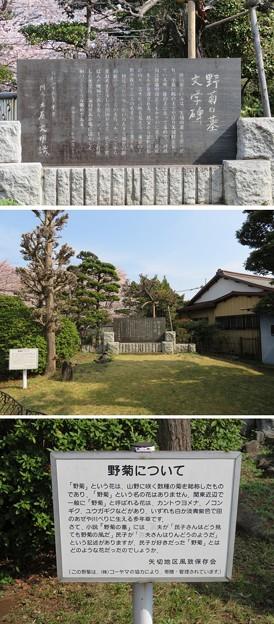 第二次国府台合戦場/西蓮寺(松戸市)野菊の墓文学碑