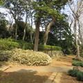 Photos: 国府台城(市川市)土塁跡