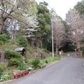 18.03.27.松戸城(千葉大学松戸キャンパス)櫓台跡