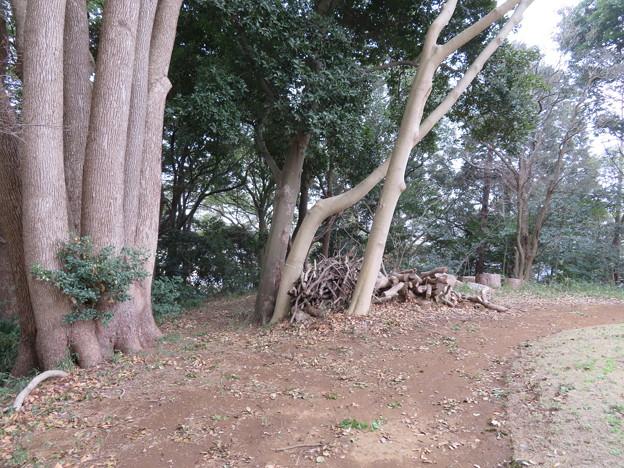 Photos: 松戸城(千葉大学松戸キャンパス)壱台