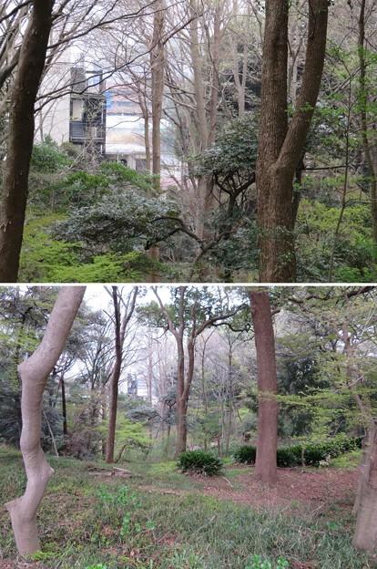 松戸城(千葉大学松戸キャンパス)壱台南