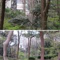 Photos: 松戸城(千葉大学松戸キャンパス)壱台南