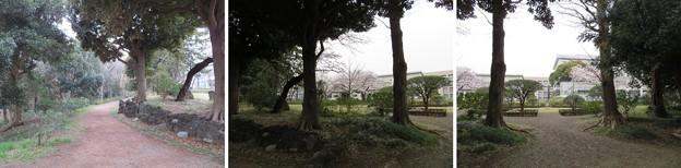 松戸城(千葉大学松戸キャンパス)中心郭