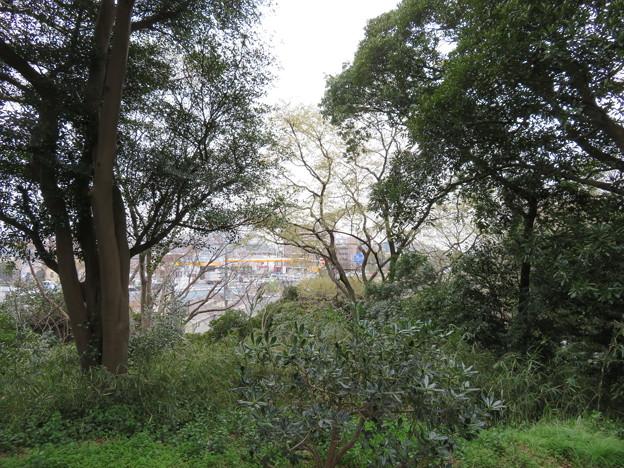 松戸城(千葉大学松戸キャンパス)南