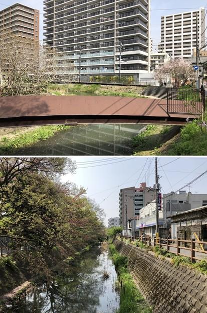 坂川(松戸市)北・南