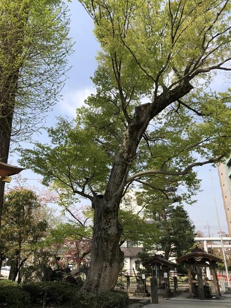 松戸神社(千葉県)
