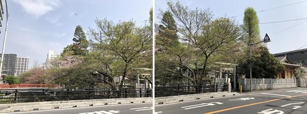 18.04.03.松戸宿(千葉県)陣屋口橋・松戸神社