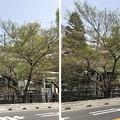 Photos: 18.04.03.松戸宿(千葉県)陣屋口橋・松戸神社