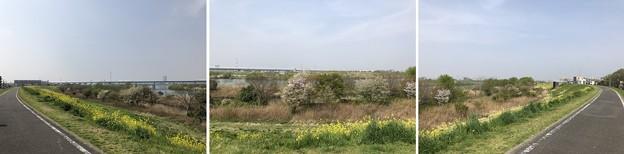 松戸宿(千葉県)江戸川