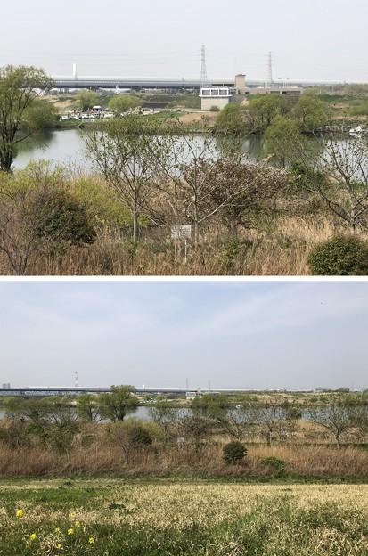 下横町渡船場跡(松戸市)江戸川