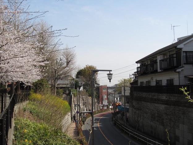 写真: 12.04.10.平塚神社/平塚城跡(北区)蝉坂