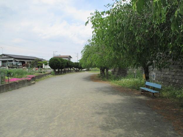 某公園(秩父市)