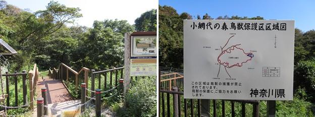 新井城 外引橋跡/小網代の森(三浦市)