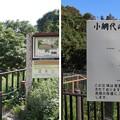 Photos: 新井城 外引橋跡/小網代の森(三浦市)