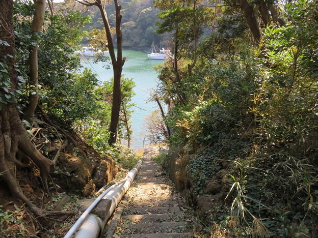 新井城 堀切(三浦市)油壺湾